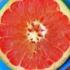 grapefruit_Barbara L. Hanson